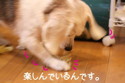 11_20081211224119.jpg