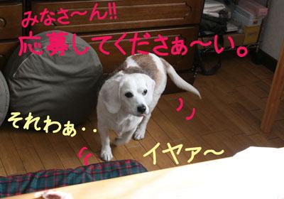 11_20081217154138.jpg