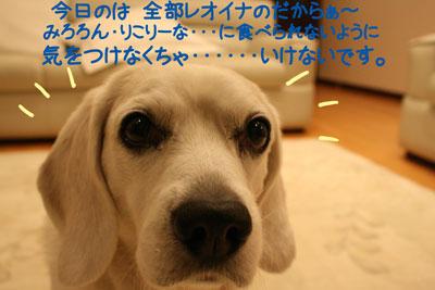 11_20090108135845.jpg