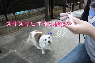 11_20090527162452.jpg