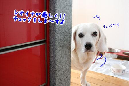 11_20090726204113.jpg