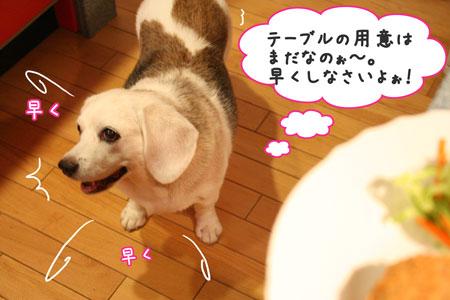 11_20090801211649.jpg