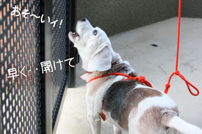 12_20081028195650.jpg