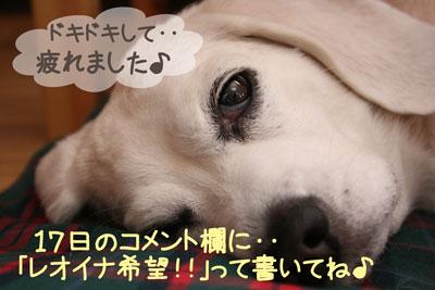 12_20081217155143.jpg