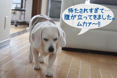 13_20090211182821.jpg
