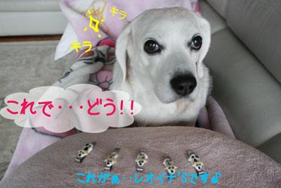 14_20081209194146.jpg
