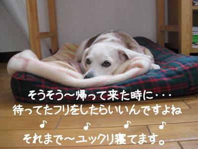 14_20090211182830.jpg