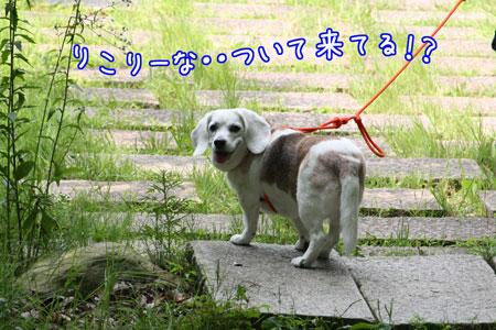 14_20090626134330.jpg