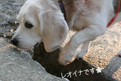 15_20081019130317.jpg