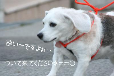 17_20081028195717.jpg