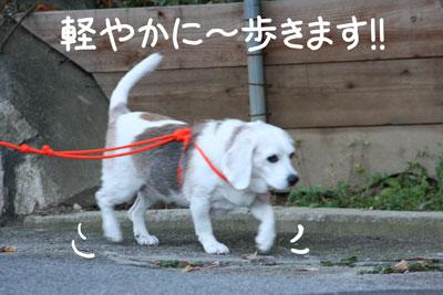 19_20081028195751.jpg