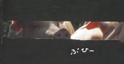 1_20081021232005.jpg