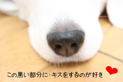 1_20081025132053.jpg