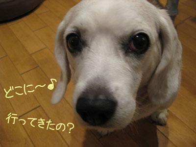 1_20081102145206.jpg