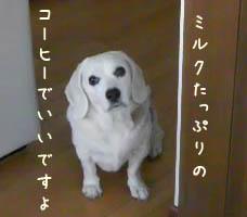 1_20081213001120.jpg