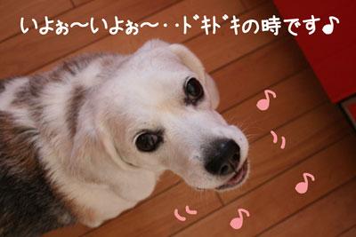 1_20081217150743.jpg