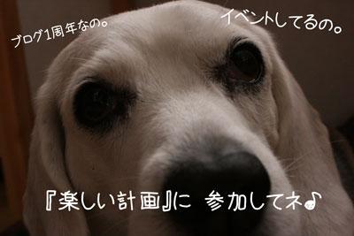 1_20081220192113.jpg
