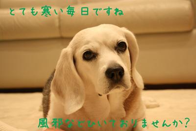 1_20090110193215.jpg