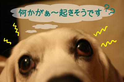 1_20090120220246.jpg