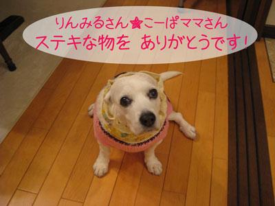 1_20090129201255.jpg