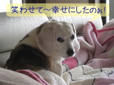 1_20090131195448.jpg