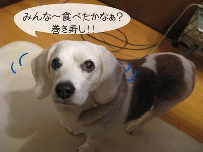 1_20090203214956.jpg