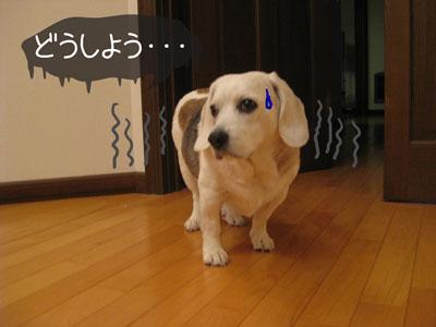 1_20090209185136.jpg