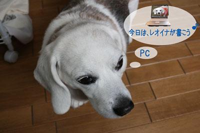 1_20090211165905.jpg