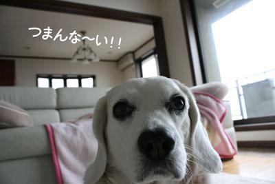 1_20090213155415.jpg
