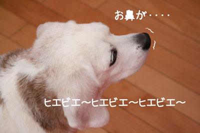 1_20090216180927.jpg