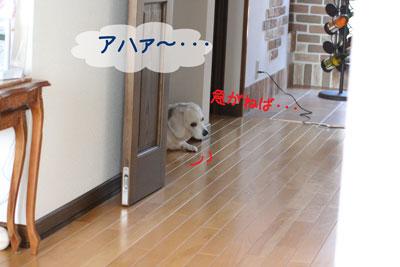 1_20090218205035.jpg