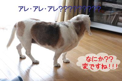 1_20090218213014.jpg