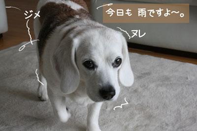 1_20090224171553.jpg