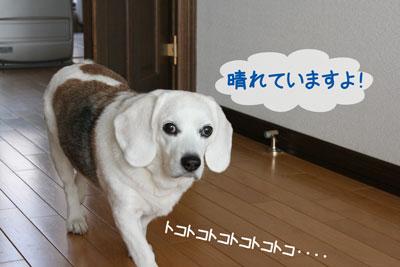 1_20090226145003.jpg