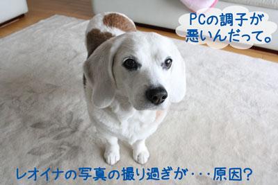1_20090227220405.jpg