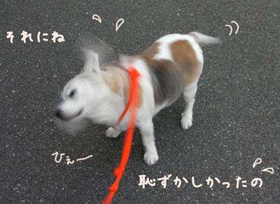 1_20090407204403.jpg