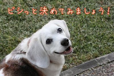 1_20090501203232.jpg