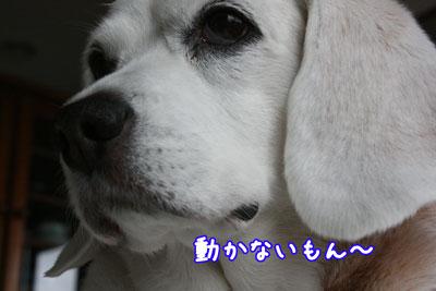 1_20090508211550.jpg
