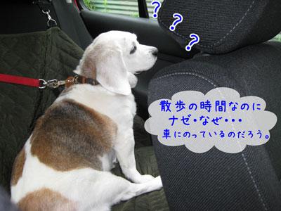 1_20090525123730.jpg