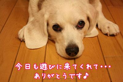 1_20090528184039.jpg