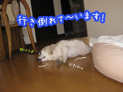 1_20090530151144.jpg