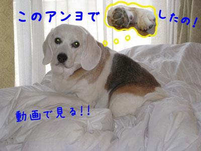 1_20090531133618.jpg