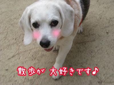 1_20090603203610.jpg