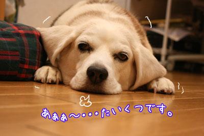 1_20090605181538.jpg