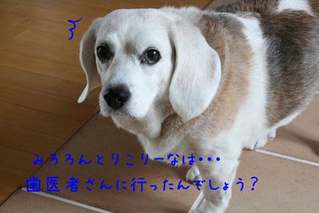 1_20090630182011.jpg