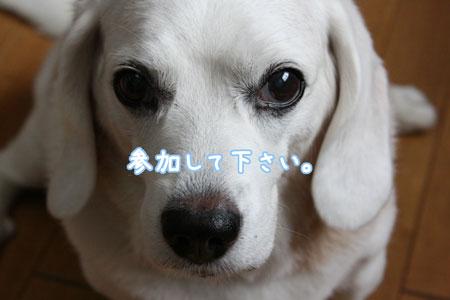 1_20090705120957.jpg