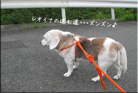 1_20090729210155.jpg