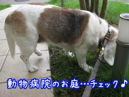 1_20090806142829.jpg