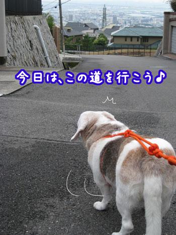 1_20090810181613.jpg