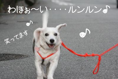 20_20081028201005.jpg